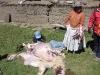 Bolivie-bolivia-cordillere-royale-condoriri (22).jpg