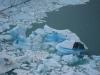 Argentine_El_Calafate_patagonie_perito_moreno_glacier_ (10).jpg