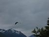 Argentine_El_Calafate_patagonie_perito_moreno_glacier_ (7).jpg