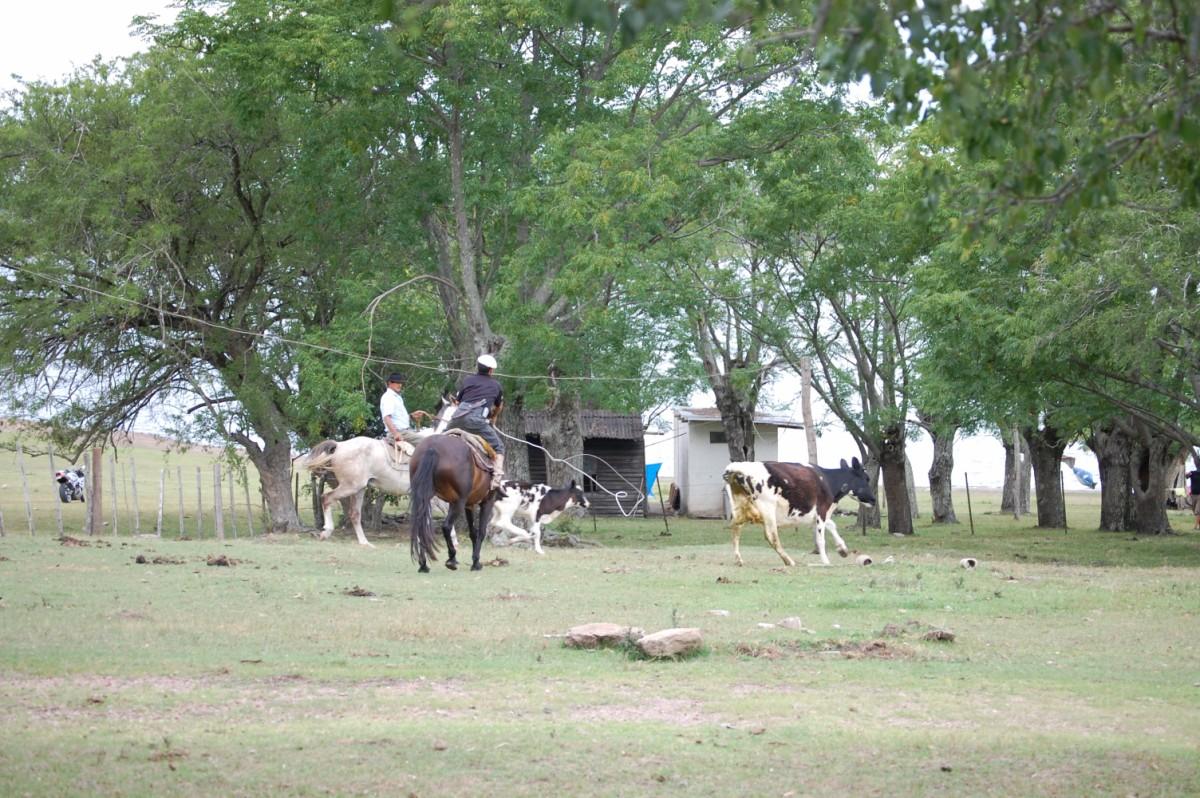Uruguay-estancia-santa-sofia (12).jpg