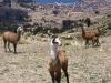 bolivie-bolivia-lac-titicaca-puno-copacabana-isla-del-sol (10).jpg
