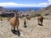 bolivie-bolivia-lac-titicaca-puno-copacabana-isla-del-sol (9).jpg