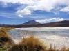 bolivie-bolivia-sud-lipez-laguna-canapa-colorada-salar-atacama (18).jpg