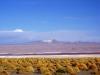 bolivie-bolivia-sud-lipez-laguna-canapa-colorada-salar-atacama (25).jpg