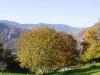 cantal-vic-sur-cere-automne-027.jpg
