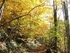 cantal-vic-sur-cere-automne-031.jpg
