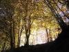 cantal-vic-sur-cere-automne-034.jpg