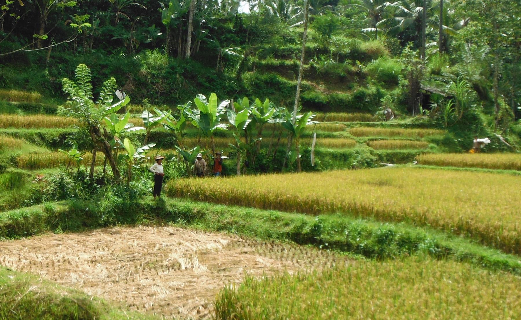 bali-ubud-batur-agung(2)