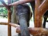 thailande-chiang-mai-rai-(29)