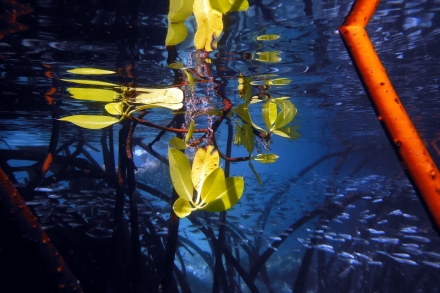 flores-kelimutu-kanawa(34)