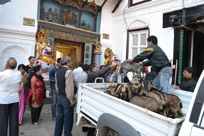 katmandou-temple-monkey(8)
