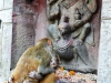 katmandou-temple-monkey(10)