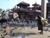 katmandou-temple-monkey(6)