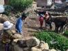 la-paz-titicaca-coroico31