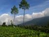 indonesie-yodgakarta-merapi(22)