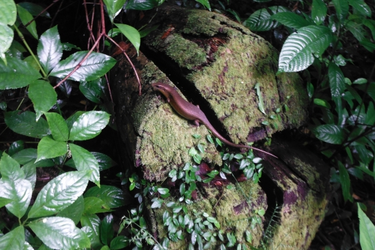 lombok-rinjani-trek(1)