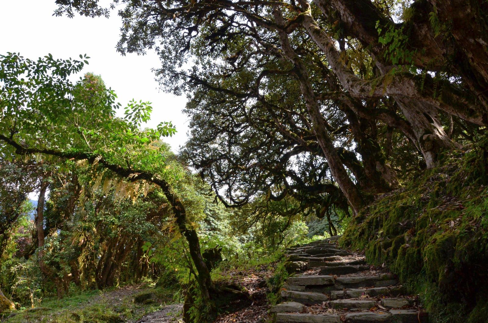 Tour-des-annapurna-(48)