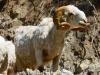 Tour-des-annapurna-(35)