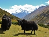 Tour-des-annapurna-(5)